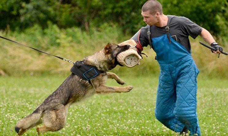 Дрессировка собак на защиту Харьков