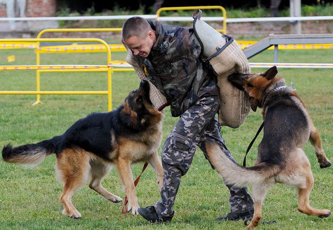 цели дрессировки собак на защиту