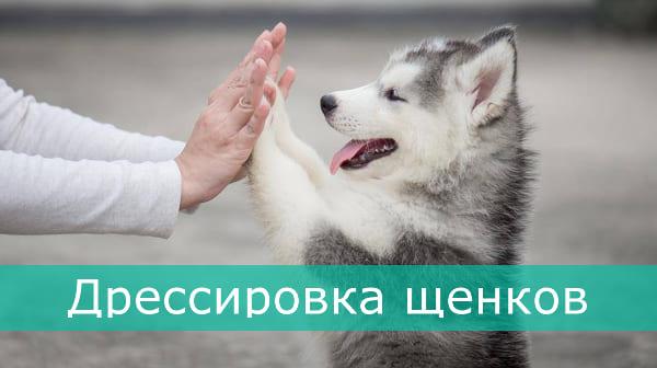 Дрессировка щенков Харьков - Кинолог