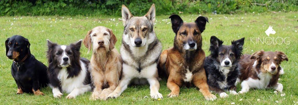 Дрессировка собак в Харькове