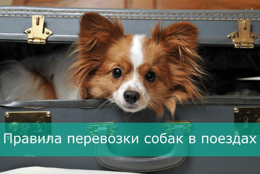 Правила перевозки собак в поездах Украины