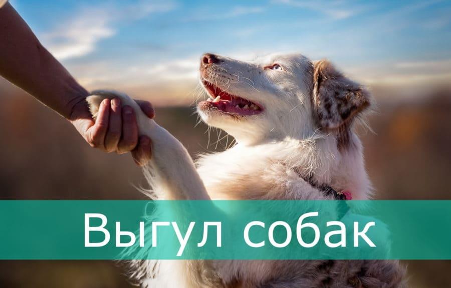 Выгул собак в Харькове