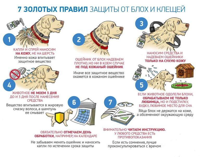 7 правил захисту від кліщів і бліх