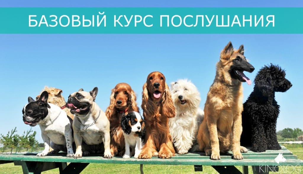 Базовый курс послушания собак Харьков
