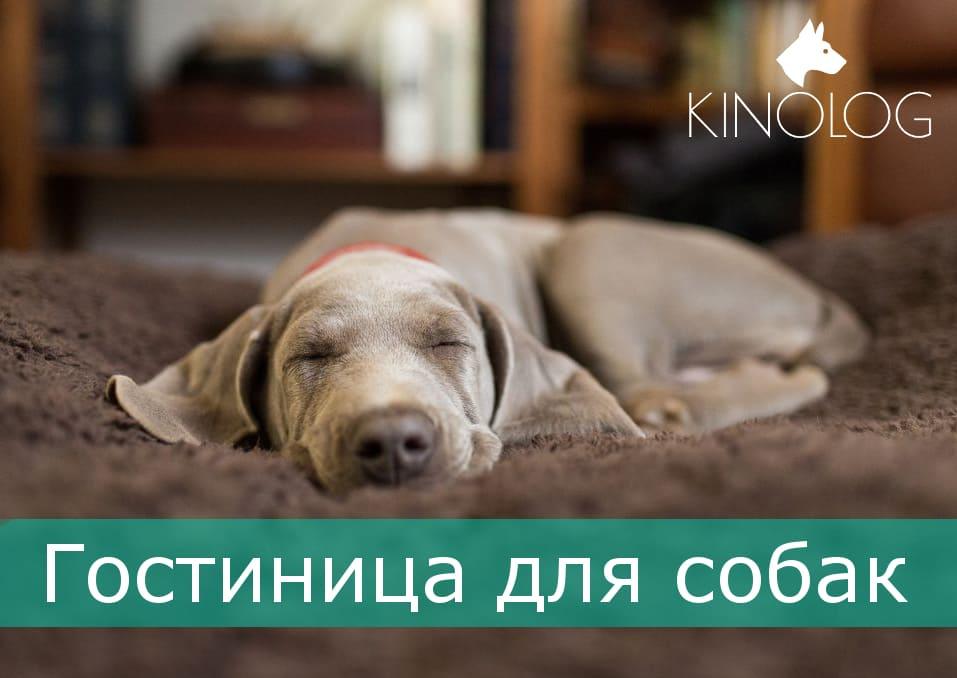 Гостиница для собак в Харькове