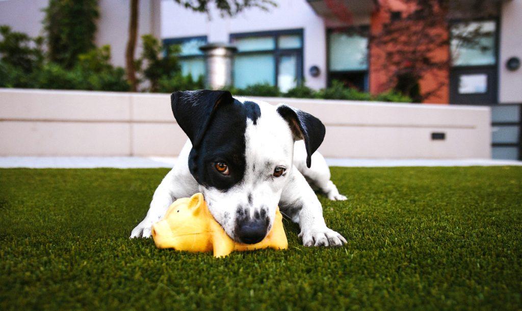 Основные правильа дрессировки собак