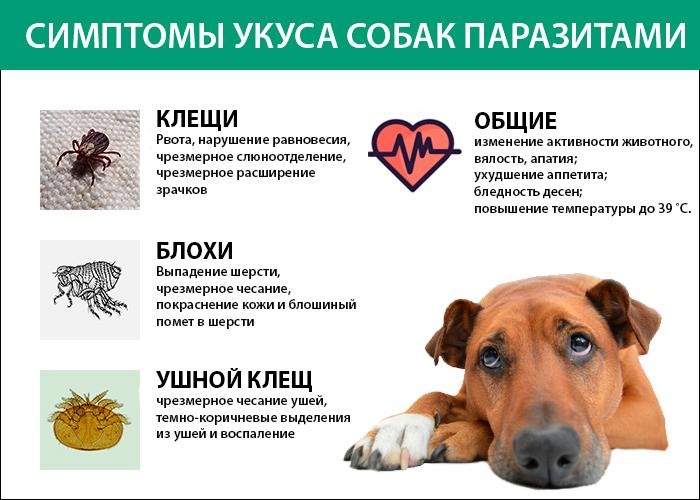 Симптоми укусу собаки кліщами і іншими паразитами