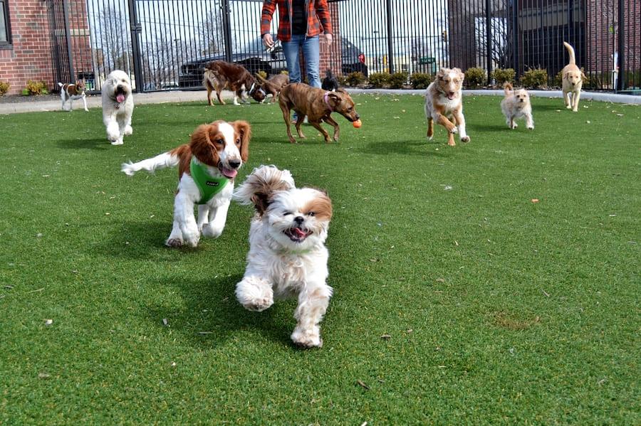 передержка собак в Харькове
