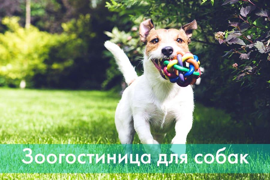 Где оставить собаку в Харькове - зоогостиница Кинолог