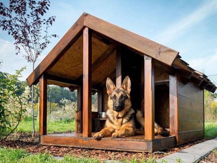 зоогостиница для собак Кинолог