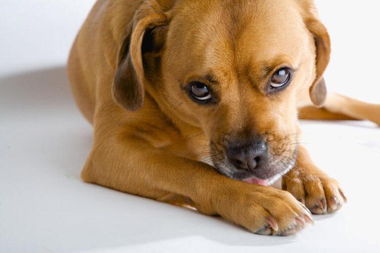 как понять у собака глисты