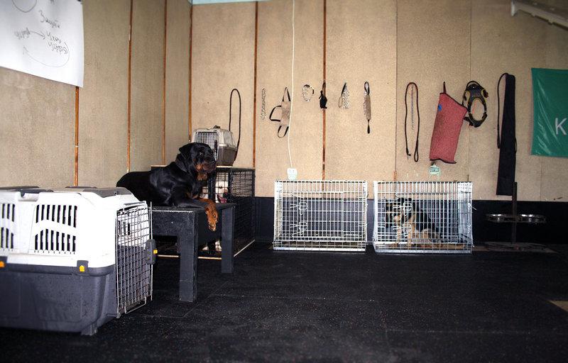 Гостиница для собак KINOLOG