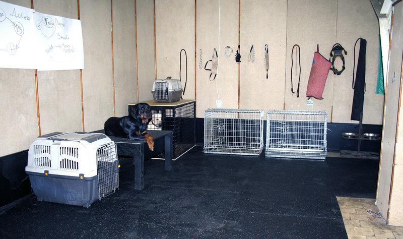 Зоогостиница в Харькове для собак