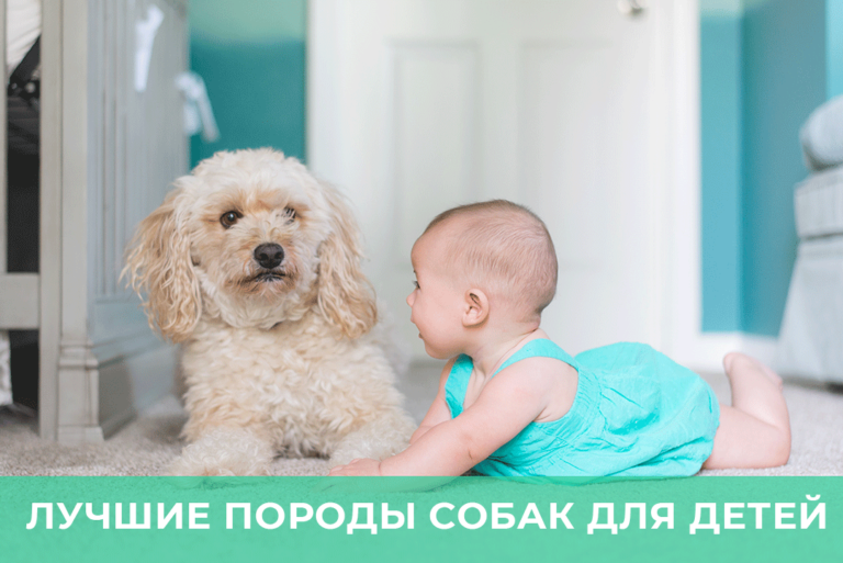 Лучшие породы собак для детей