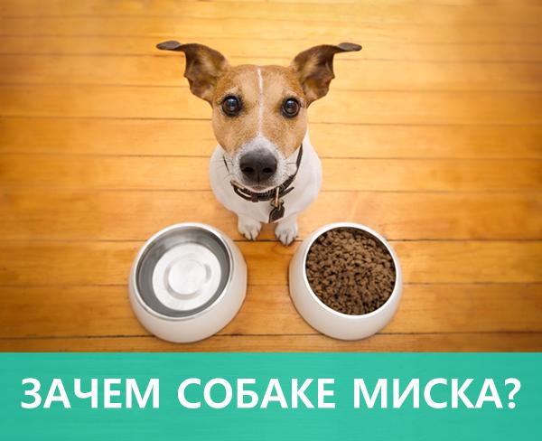 Зачем собаке миска ?