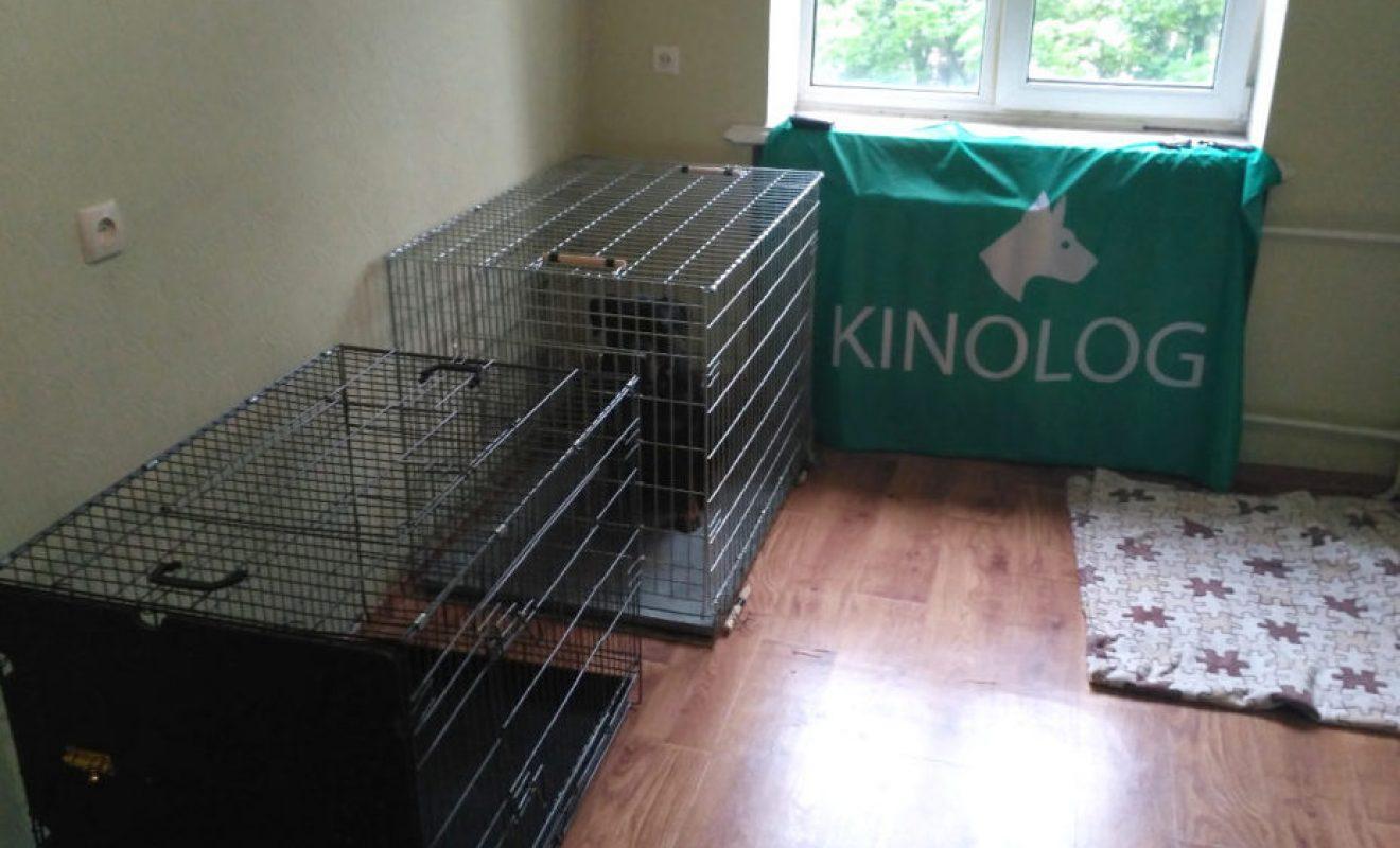 Передержка собак в домашних условиях